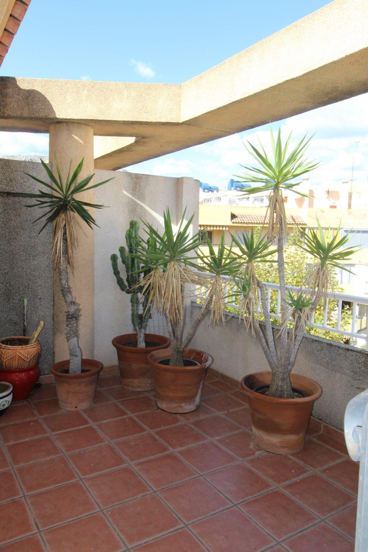 plantas terraza