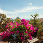Vista Bougainvillea
